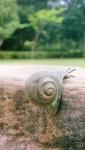 Rottenecker Bronzefigur Schnecke gebogen