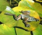 Rottenecker Bronzefigur Grasfrosch