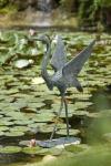 Rottenecker Bronzefigur Graureiher schreitend, groß, wasserspeiend