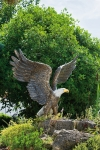 Rottenecker Bronzefigur Weißkopf-Seeadler
