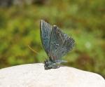 Rottenecker Bronzefigur Schmetterling