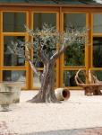 Rottenecker Bronzeskulptur Olivenbaum