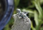 Rottenecker Bronzefigur Biene