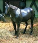 Rottenecker Bronzefigur Pony