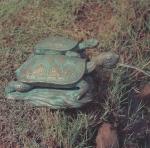 Rottenecker Bronzefigur Landschildkröte