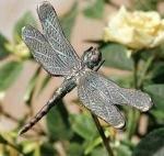 Rottenecker Bronzefigur Libelle
