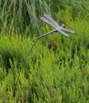 Rottenecker Bronzefigur Libelle am Stab