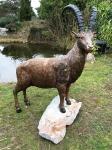 Rottenecker Bronzefigur Steinbock - lebensgroß