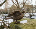 Rottenecker Bronzefigur Taube, Flügel offen
